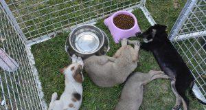 Pati Dostları festivali'nde barinak hayvanları sahiplendirildi