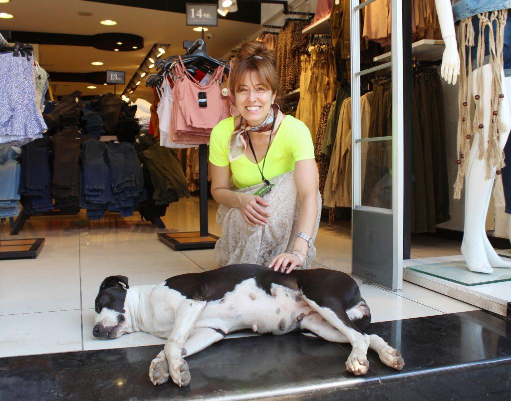 sıcaktan bunalan sokak köpekleri mağazalara sığındı