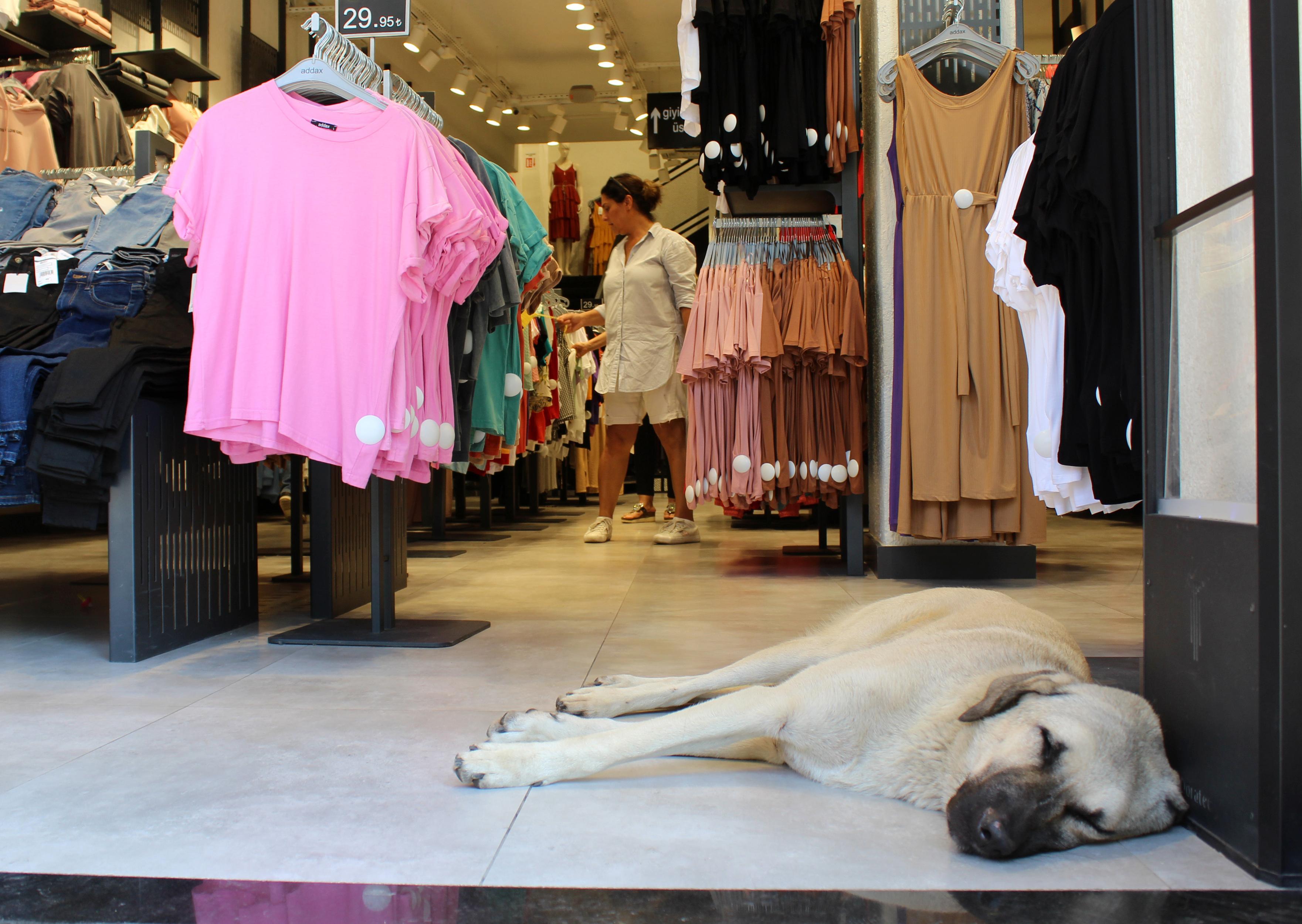 sıcaklayan sokak köpeği mağazanın kliması altında uyuyakalmış