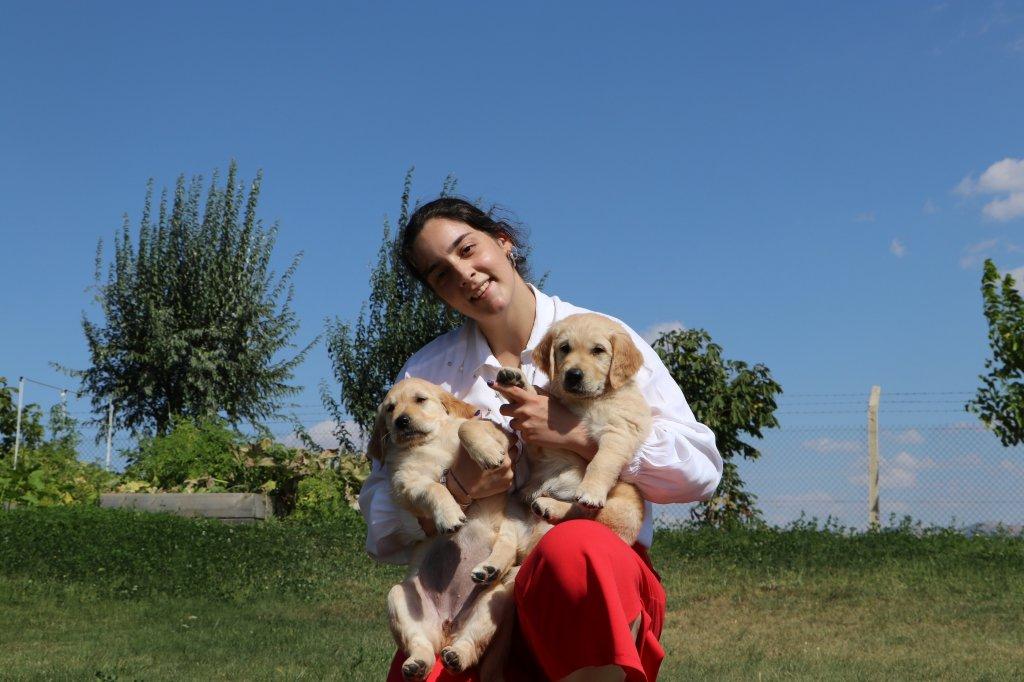 Rehber köpeği olma adayı köpek yavruları