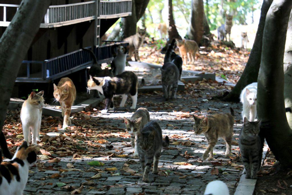 Kedi kasabasından bir fotoğraf