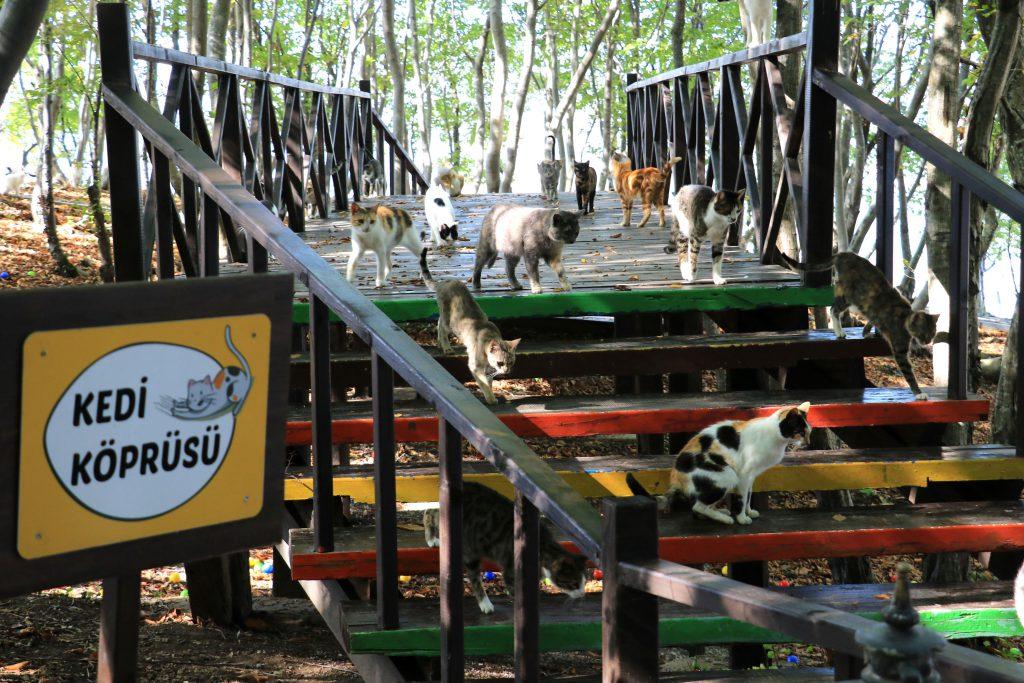 Картинки по запросу goat
