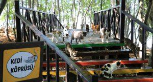Kedi Kasabasının içerisinde yer alan kedi köprüsü üzerinde vakit geçiren kediler