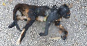Bursa'da bir kedi mangal üzerinde yakılarak öldürüldü. Soruşturma başlatıldı.