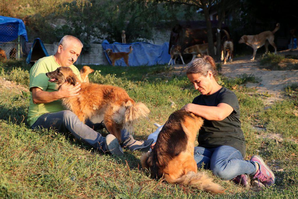 Sokak köpekleriyle sevgi ile ilgileniyorlar
