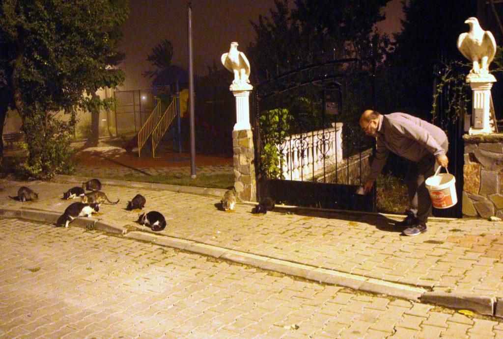 Mehmet Nezih Erkan, sokak kedileri için kuru mama veriyor.
