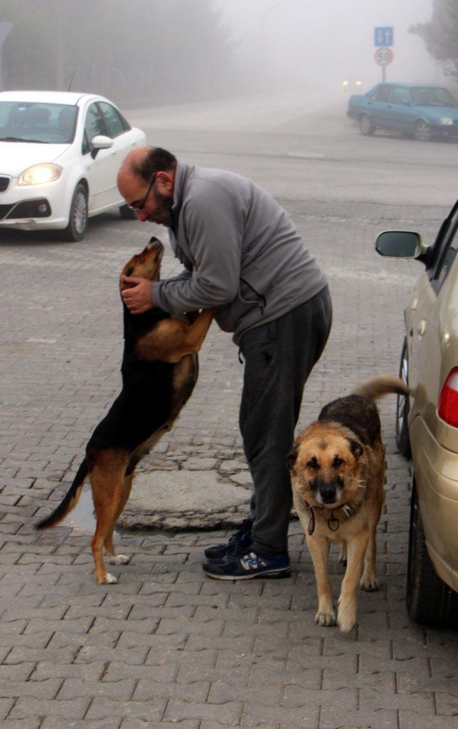 Köpekler artık onu tanıyor, sabahları onu bekliyorlar.