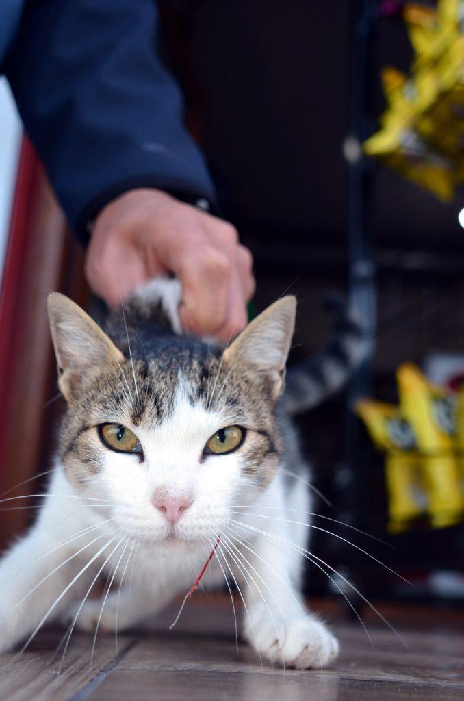 Veteriner Hekim küçük bir operasyonla kediyi kancadan kurtardı