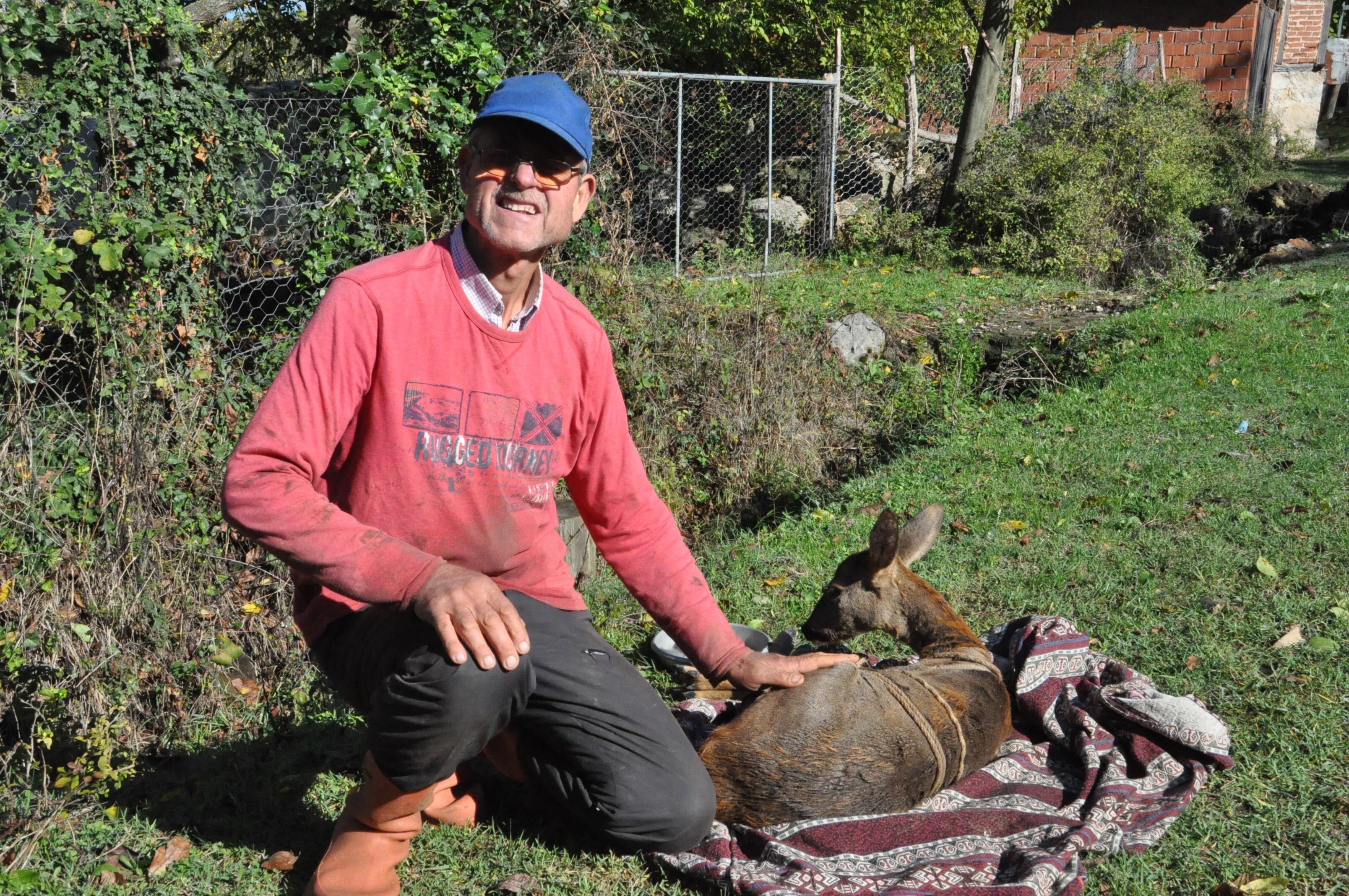 Köpekler tarafından saldırıya uğrayan karaca kurtarıldı