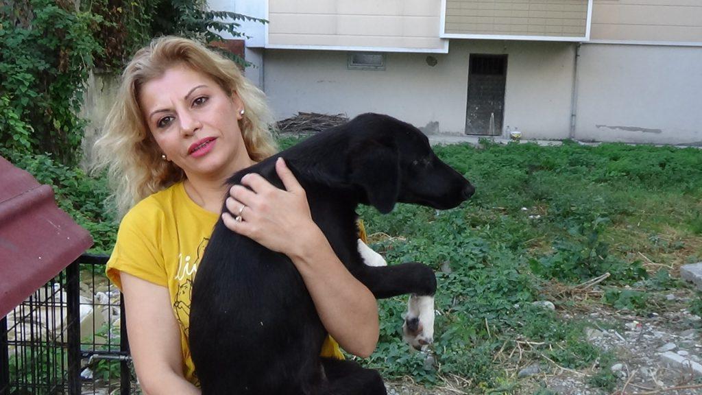 Emirli Yaylasında ölüme terk edilen köpekler için yardım çağrısı