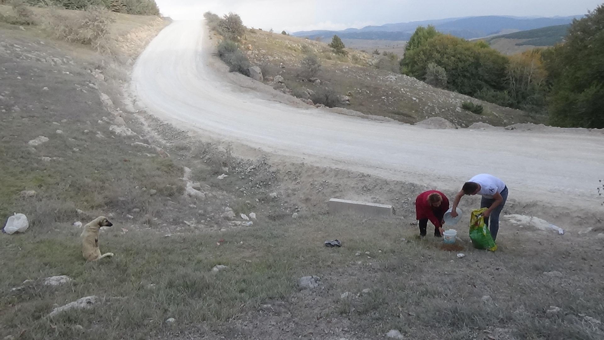 Emirli yaylası'nda terk edilen köpekler ölüme, açıkla savaşıyor