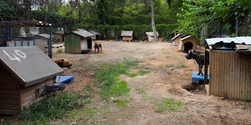 Pitbull cinsi köpekleri barınaklara terk etmek bir çözüm değil