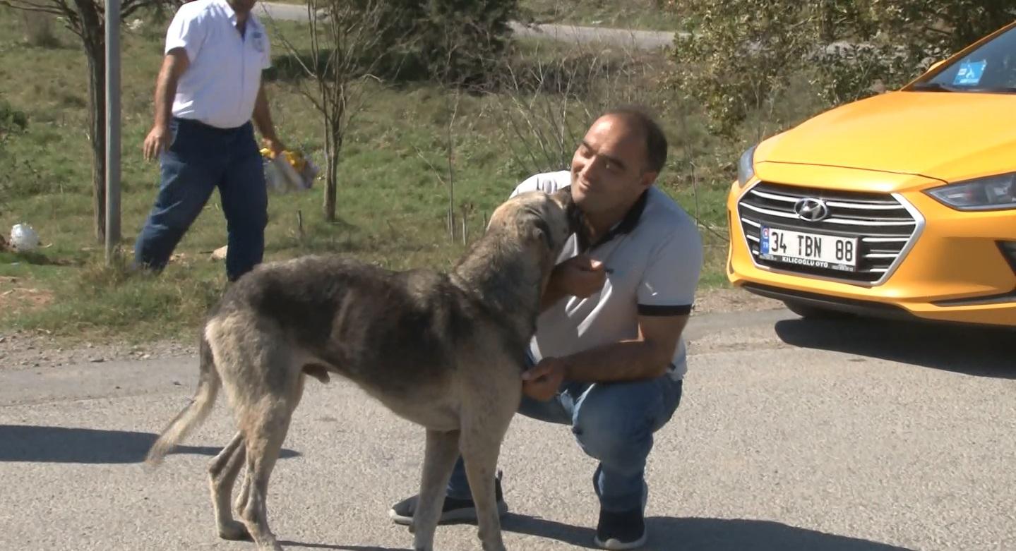 Sabiha Gökçen Havalimanı'nda görevli taksi şoförleri sokak hayvanlarını besledi