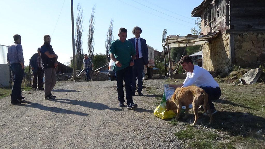Emirli Yaylası'nda ki köpekler için nihayet müjdeli haber