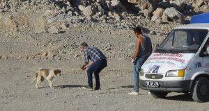 Ölümle mücadele eden köpekler kurtarıldı