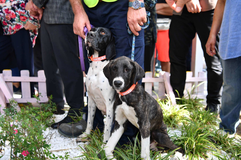 Sokak köpekleri için fosforlu tasma projesi