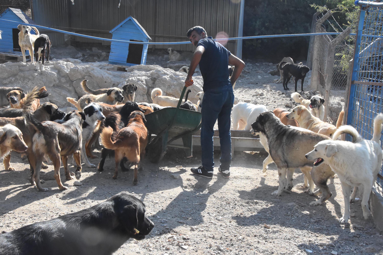 Yazlık bölgelerde tatil sonu terk edilen köpeklerin dramı