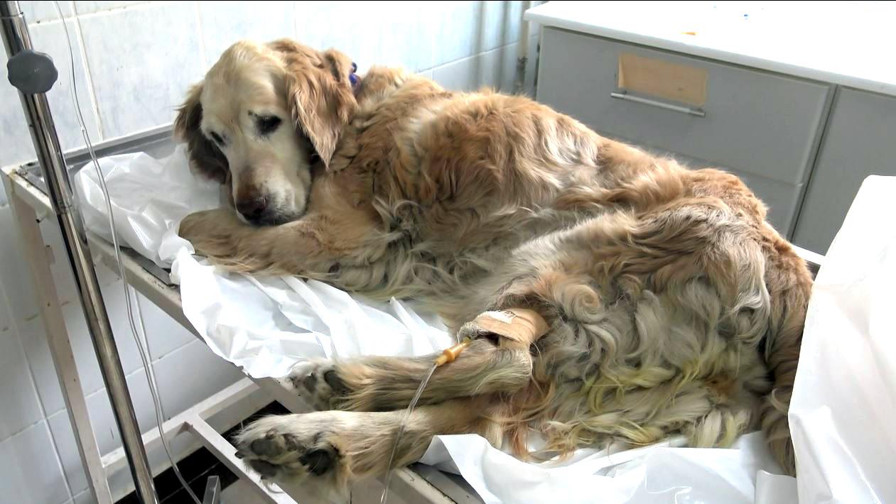 Yılda 50 bin hayvanın tedavi edildiği hastane boşaltıldı
