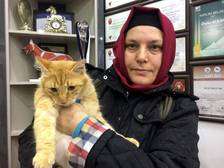 Aracın çarpıp kaçtığı kedi tedavi altına alındı