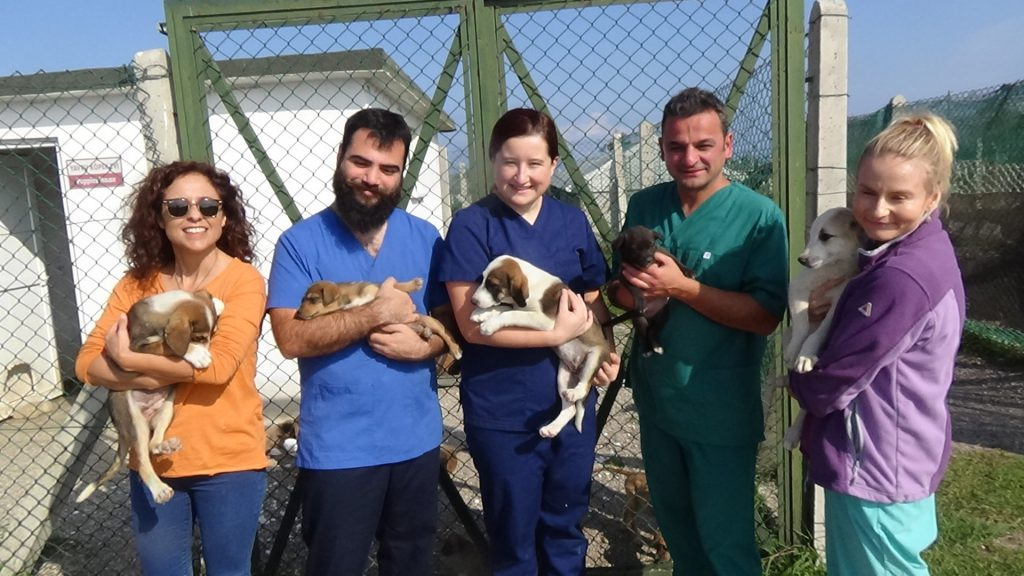 avrupadan gelen veteriner hekim adayları