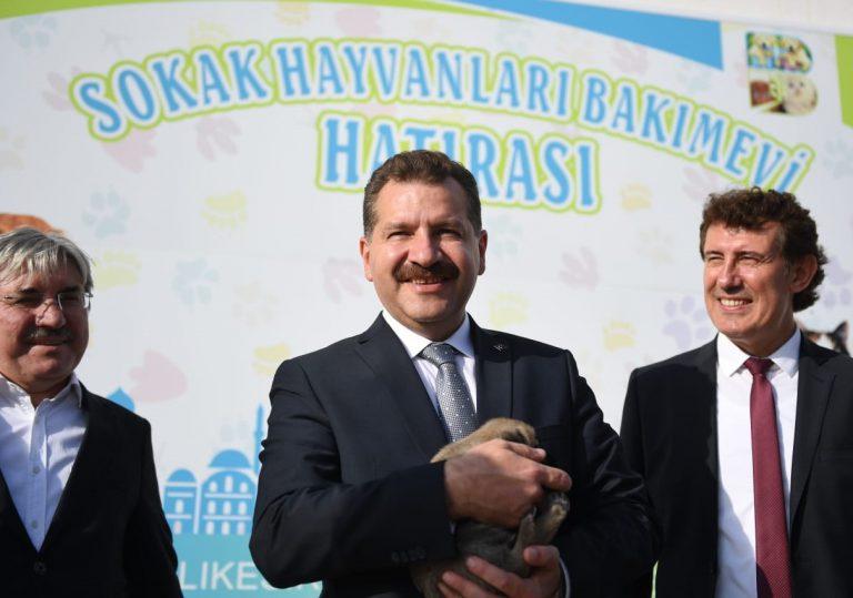 Balıkesir'de 3 yılda 4 bin 725 sokak hayvanı sahiplendirildi
