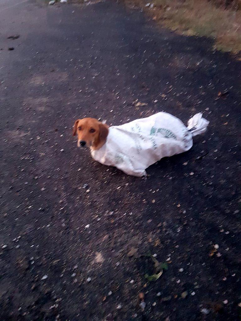 Çuval içindeki hamile köpeği minik Arif'in dikkati kurtardı
