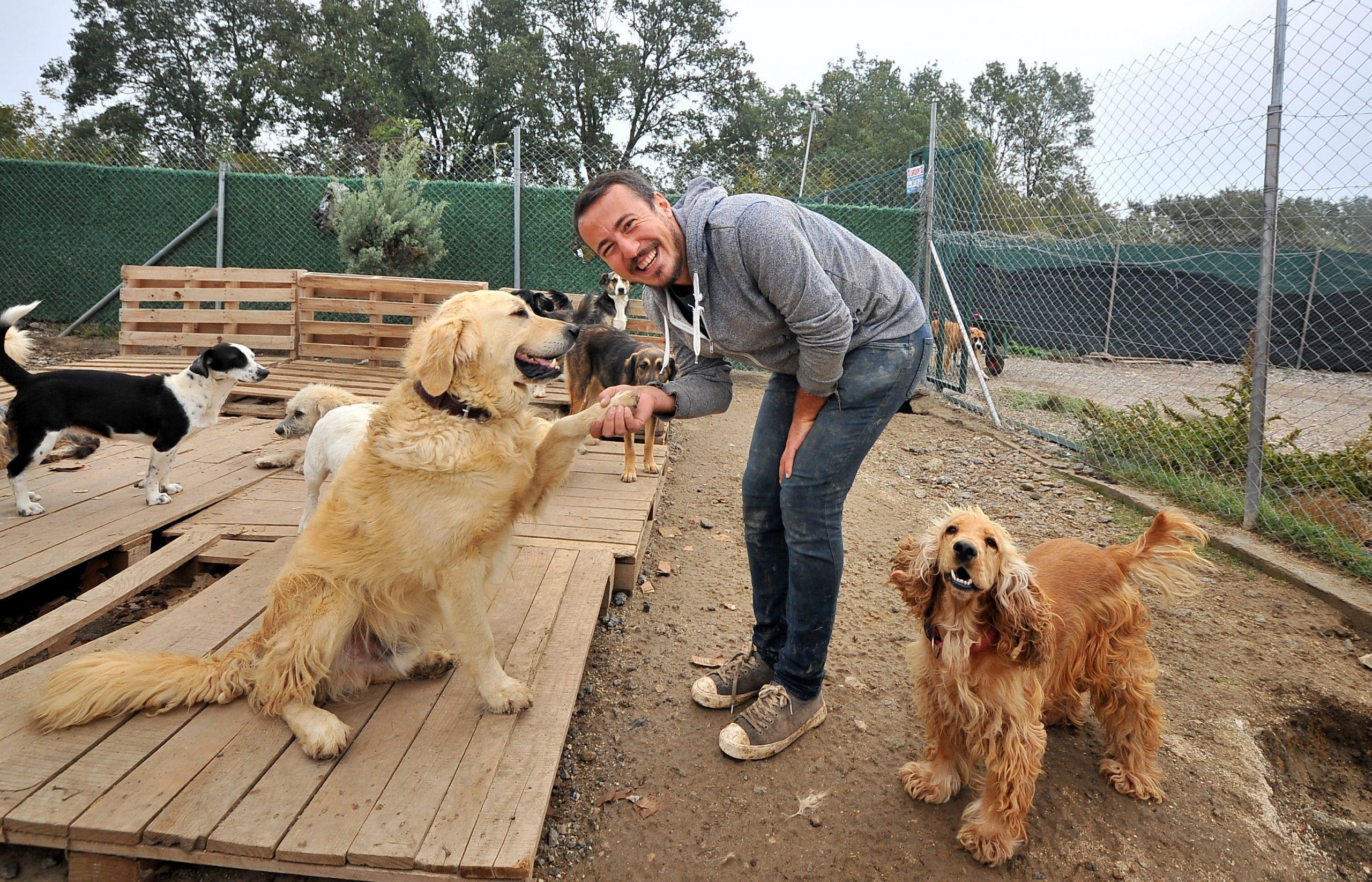 Emre Demir Bursa'da sokak köpeklerine sahip çıkıyor