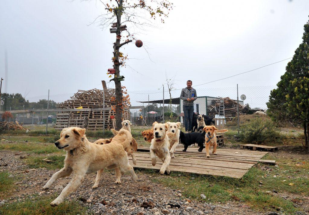 Her Eve Bir Pati Derneği'nden köpek görüntüleri