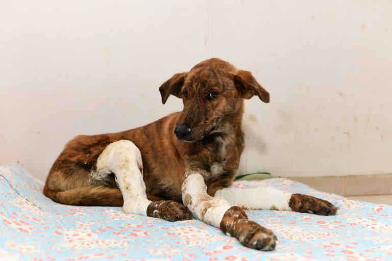 4 bacağı da kırılan Uykucu tedaviye alındı