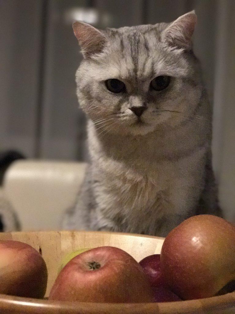 Kedim elma yiyebilir mi?