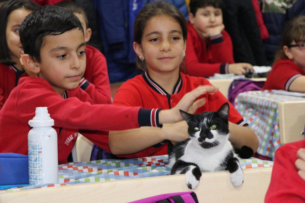 öğrenciler okulun kedisi Kartal'a bayılıyor