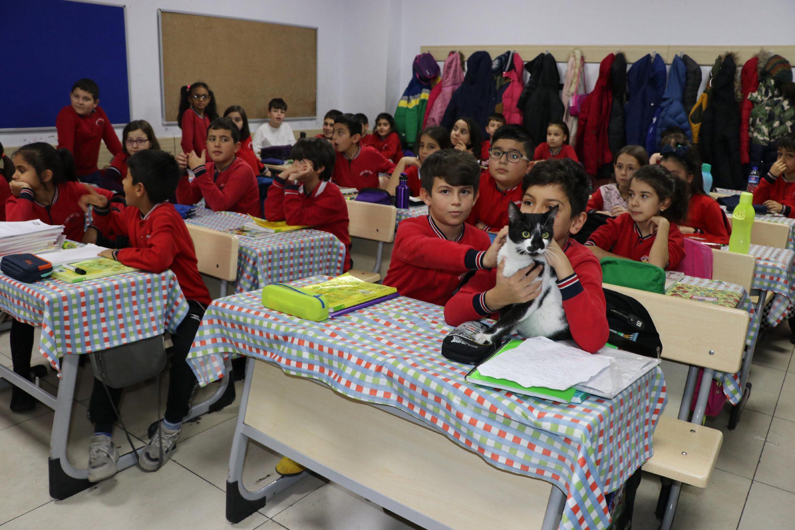 Okul Müdürünün sahiplendiği kedi öğrencilerin sevgilisi