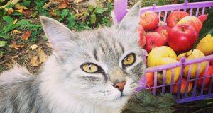 Kediler elma yer mi?