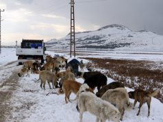 Van'da sokak ve yaban hayvanları için yiyecek bırakıldı